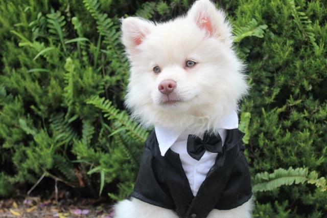 Čtyřnohý svatebčan: pes na svatbě