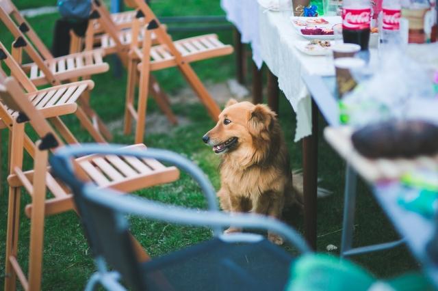 Plánujete svatbu v létě? Nejlepším místem pro popravky je v tom případě zahrada s posezením.